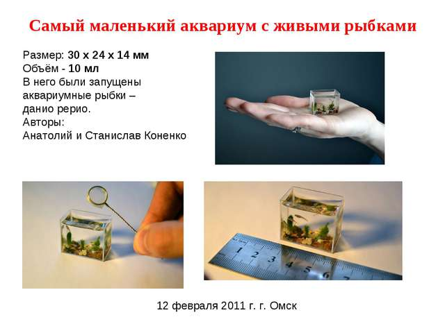 Самый маленький аквариум с живыми рыбками Размер: 30 х 24 х 14 мм Объём - 10...