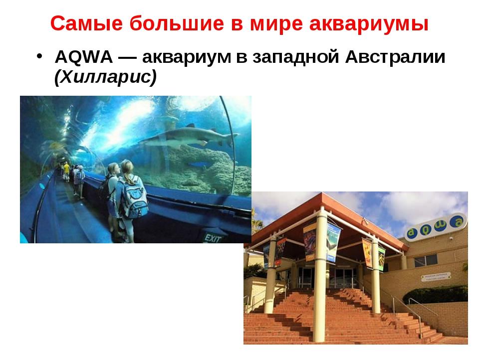 Самые большие в мире аквариумы AQWA — аквариум в западной Австралии (Хилларис)