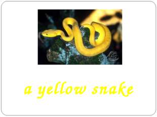a yellow snake