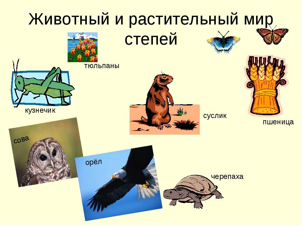 Животный и растительный мир степей кузнечик сова орёл черепаха пшеница суслик...