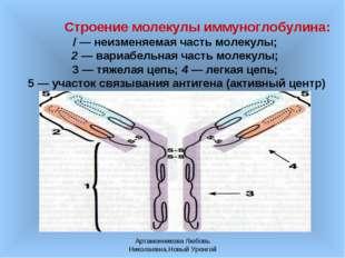 Артамонникова Любовь Николаевна,Новый Уренгой Строение молекулы иммуноглобули