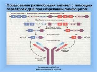 Артамонникова Любовь Николаевна,Новый Уренгой Образование разнообразия антите