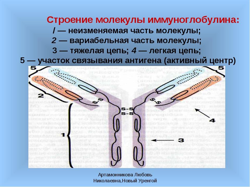 Артамонникова Любовь Николаевна,Новый Уренгой Строение молекулы иммуноглобули...