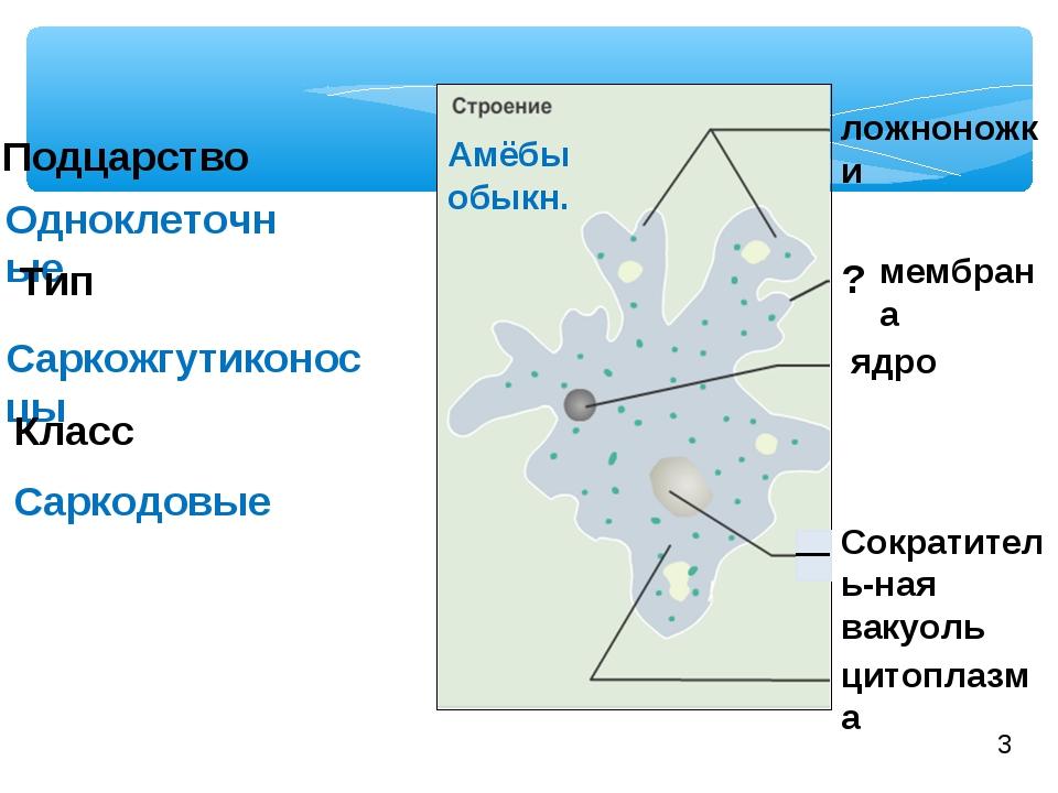 Подцарство Одноклеточные Тип Саркожгутиконосцы Саркодовые Класс Амёбы обыкн....