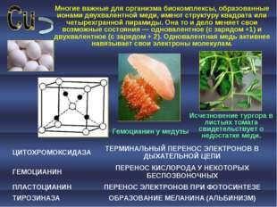 Многие важные для организма биокомплексы, образованные ионами двухвалентной м