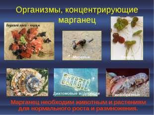 Организмы, концентрирующие марганец Марганец необходим животным и растениям д