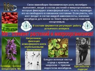 При избытке – подагра! Бледно-зеленые листья огурца с краевым некрозом — приз