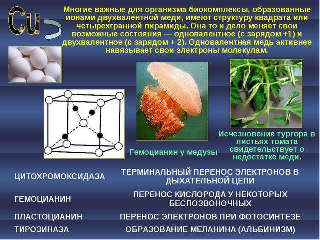 Многие важные для организма биокомплексы, образованные ионами двухвалентной м...