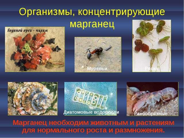 Организмы, концентрирующие марганец Марганец необходим животным и растениям д...