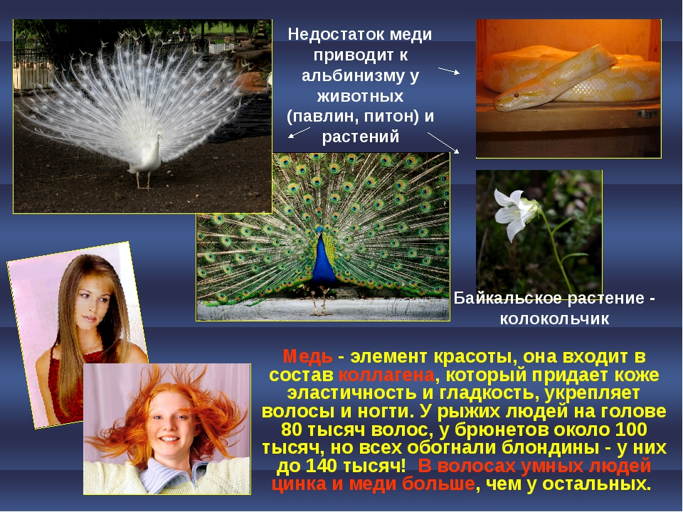 Недостаток меди приводит к альбинизму у животных (павлин, питон) и растений Б...