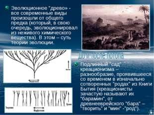 """Эволюционное """"древо» - все современные виды произошли от общего предка (котор"""