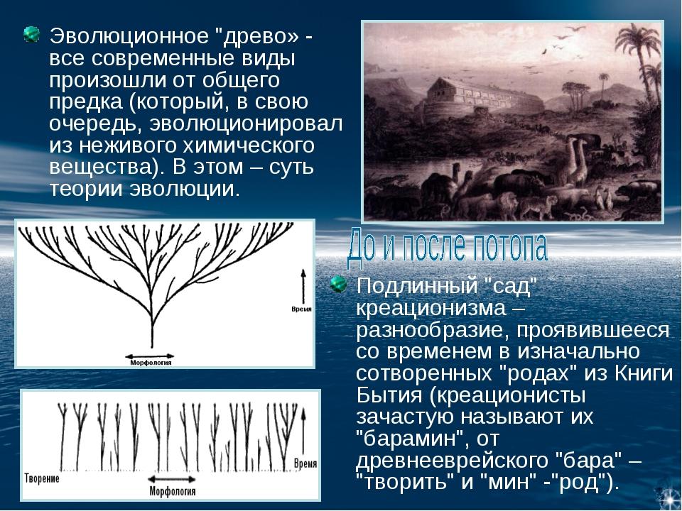 """Эволюционное """"древо» - все современные виды произошли от общего предка (котор..."""
