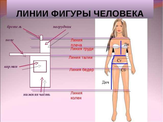 ЛИНИИ ФИГУРЫ ЧЕЛОВЕКА Дн Ст Сб Днч