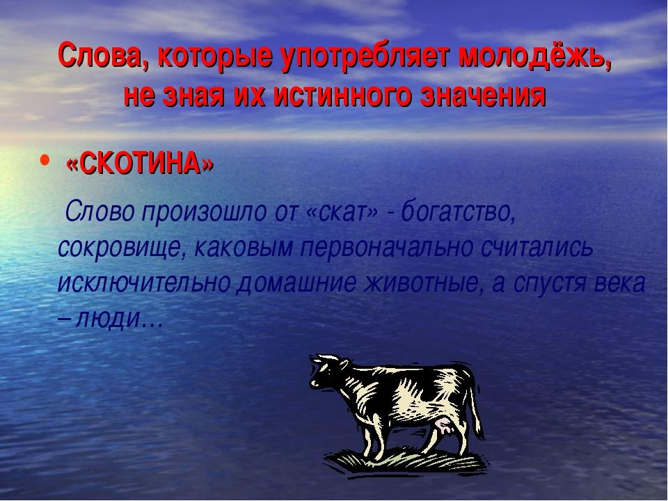 Слова, которые употребляет молодёжь, не зная их истинного значения «СКОТИНА»...