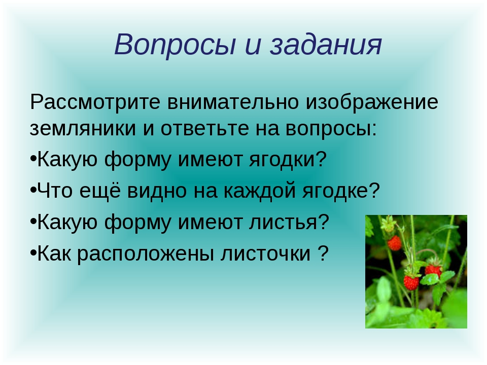 Вопросы и задания Рассмотрите внимательно изображение земляники и ответьте н...