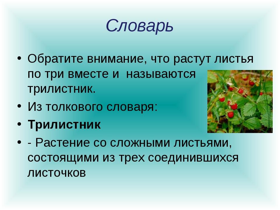 Словарь Обратите внимание, что растут листья по три вместе и называются трил...