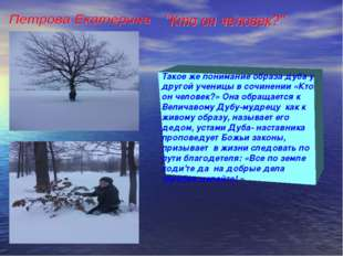 Такое же понимание образа дуба у другой ученицы в сочинении «Кто он человек?»