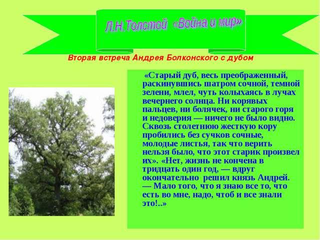 Вторая встреча Андрея Болконского с дубом «Старый дуб, весь преображенный, ра...