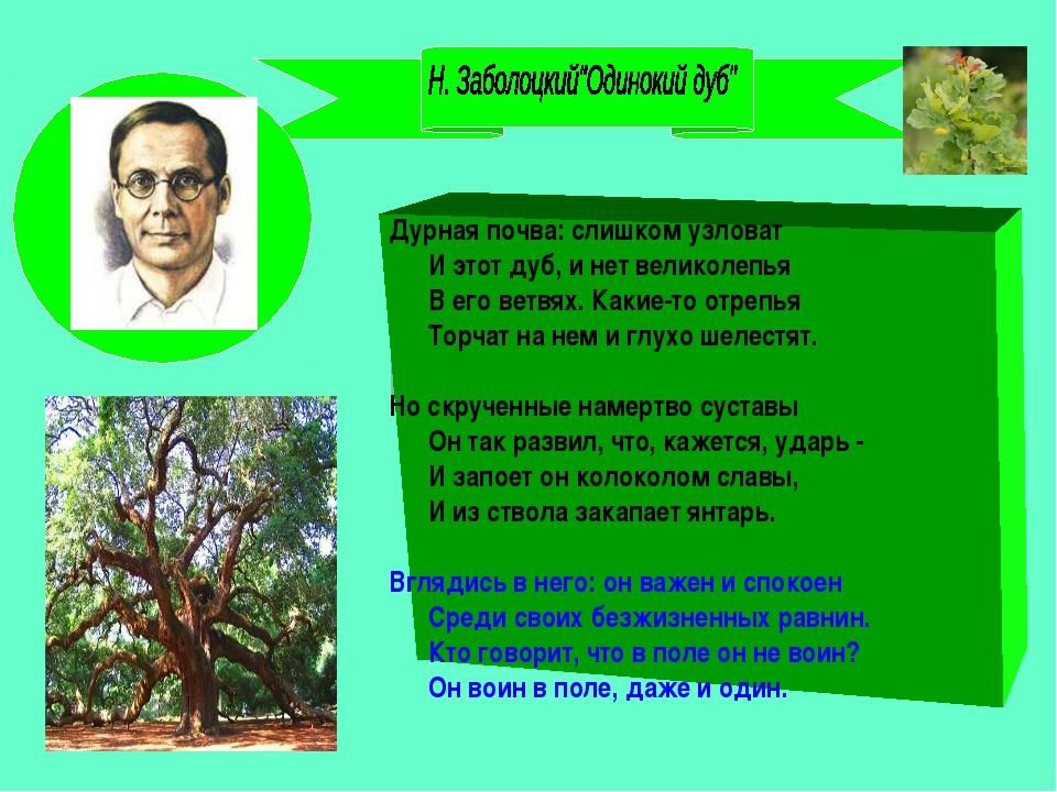 Дурная почва: слишком узловат И этот дуб, и нет великолепья В его ветвях. Как...