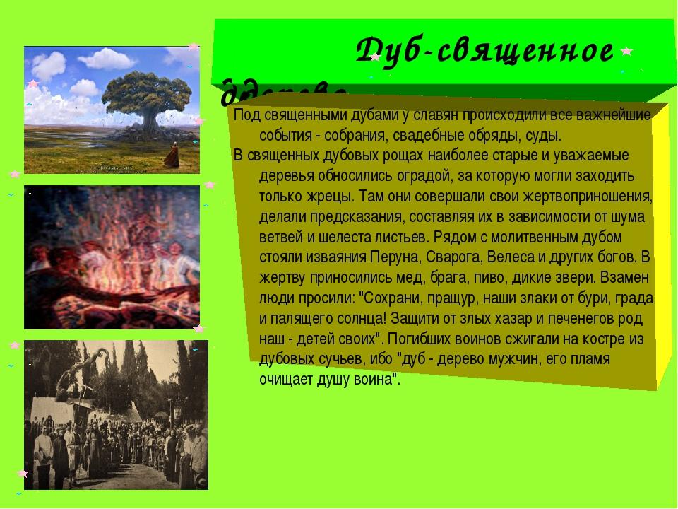 Дуб-священное дерево Дуб-священное дерево Под священными дубами у славян пpо...