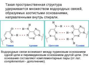 Такая пространственная структура удерживается множеством водородных связей,