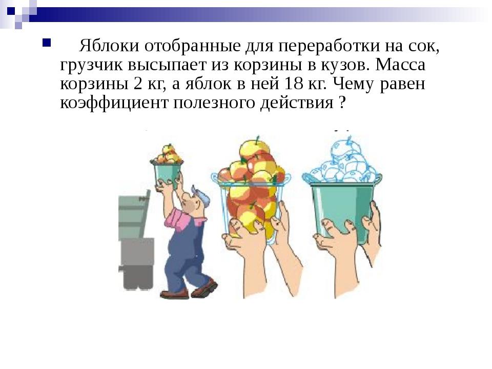 Яблоки отобранные для переработки на сок, грузчик высыпает из корзины в кузо...