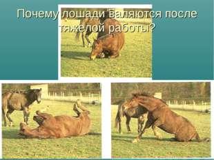 Почему лошади валяются после тяжелой работы?