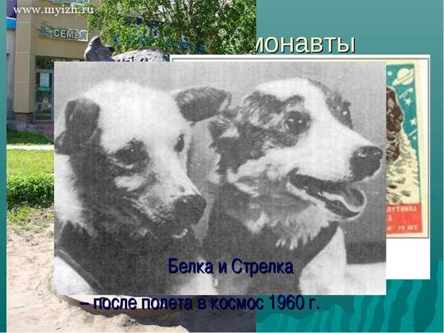 Собаки - космонавты Белка и Стрелка – после полета в космос 1960 г.