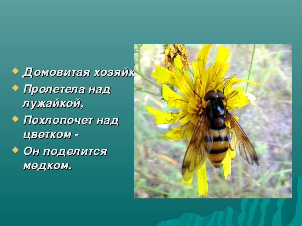 Домовитая хозяйка Пролетела над лужайкой, Похлопочет над цветком - Он поделит...