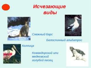 Исчезающие виды Снежный барс Белоспинный альбатрос Колпица Командорский или