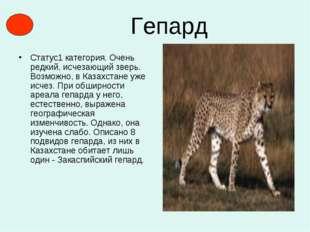 Гепард Статус1 категория. Очень редкий, исчезающий зверь. Возможно, в Казахст