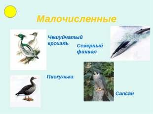 Малочисленные Чешуйчатый крохаль Северный финвал Пискулька Сапсан