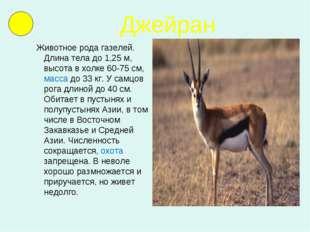 Джейран Животное рода газелей. Длина тела до 1,25 м, высота в холке 60-75 см,