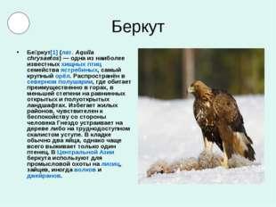 Беркут Бе́ркут[1] (лат.Aquila chrysaetos)— одна из наиболее известных хищны
