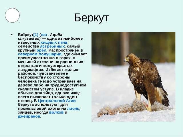 Беркут Бе́ркут[1] (лат.Aquila chrysaetos)— одна из наиболее известных хищны...