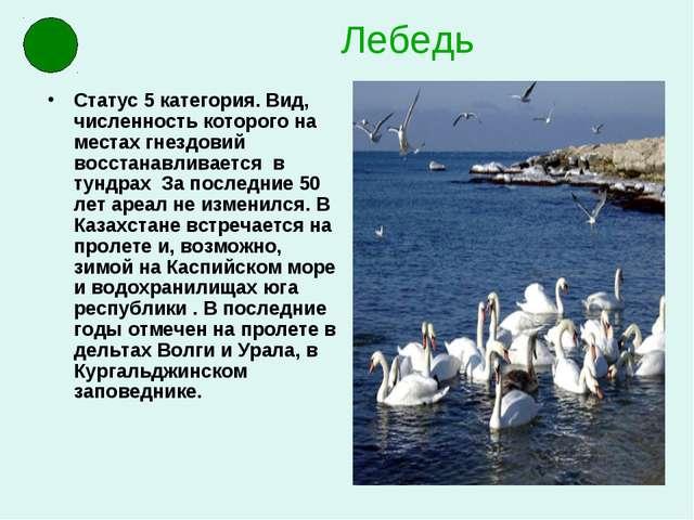 Лебедь Статус 5 категория. Вид, численность которого на местах гнездовий восс...