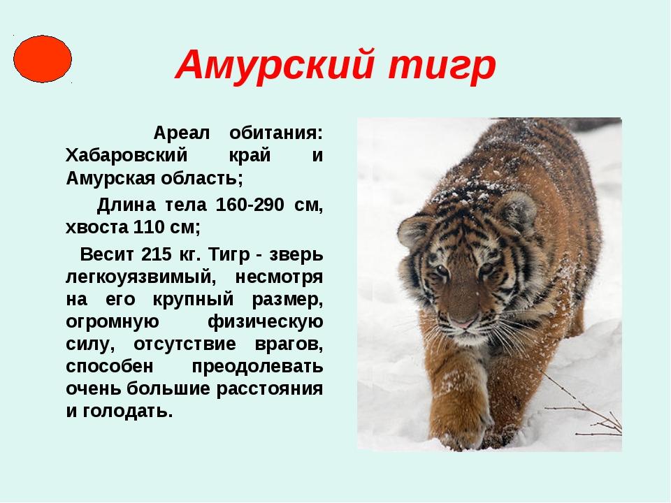 Амурский тигр Ареал обитания: Хабаровский край и Амурская область; Длина тела...
