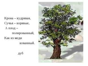 дуб Крона – кудрявая, Сучья – корявые, А плод – полированный, Как из меди ков