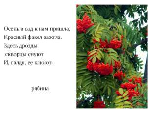 рябина Осень в сад к нам пришла, Красный факел зажгла. Здесь дрозды, скворцы