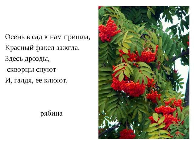 рябина Осень в сад к нам пришла, Красный факел зажгла. Здесь дрозды, скворцы...