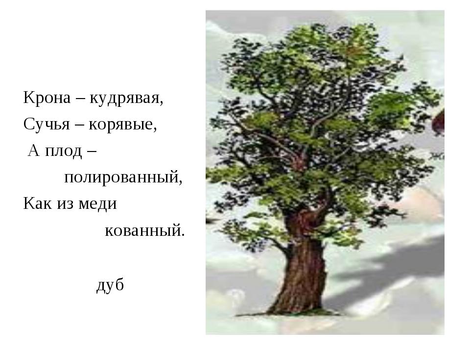 дуб Крона – кудрявая, Сучья – корявые, А плод – полированный, Как из меди ков...