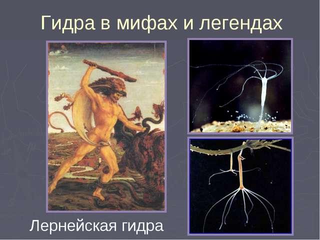 Лернейская гидра Гидра в мифах и легендах