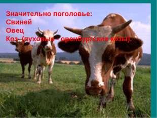 Значительно поголовье: Свиней Овец Коз (пуховые - оренбургские козы).