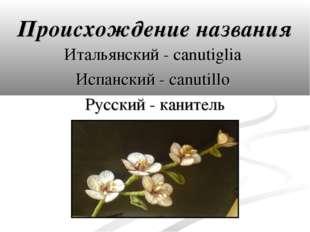 Происхождение названия Итальянский - canutiglia Испанский - canutillo Русский