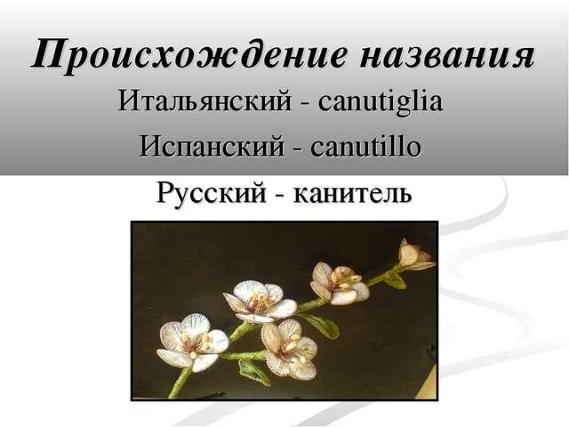 Происхождение названия Итальянский - canutiglia Испанский - canutillo Русский...