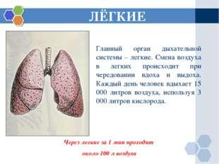 ЛЁГКИЕ Через легкие за 1 мин проходит около 100 л воздуха Главный орган дыхат