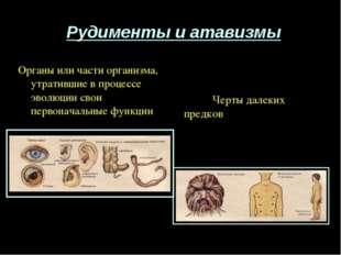 Рудименты и атавизмы Черты далеких предков Органы или части организма, утрати