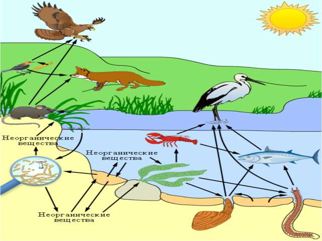 Что такое «экологическая цепочка?»