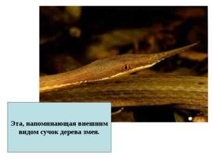 Эта, напоминающая внешним видом сучок дерева змея.