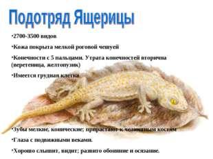 2700-3500 видов Кожа покрыта мелкой роговой чешуей Конечности с 5 пальцами. У